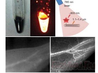 Нанотрубки помогли рассмотреть капиляры в лапах мышей