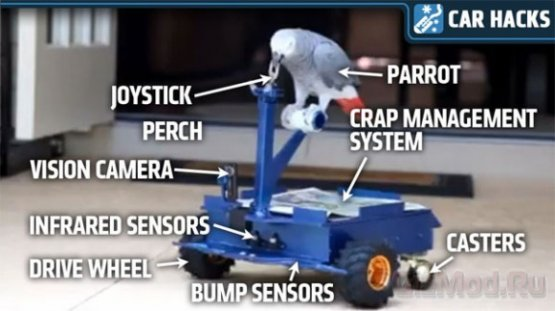 Энтузиаст собрал электроскутер для попугая
