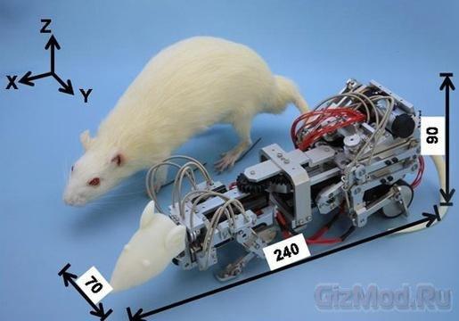 Ученые  создали робо-крысу для запугивания настоящих
