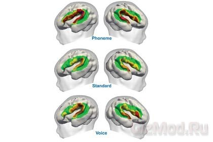 Человеческий мозг различает звуки речи до рождения