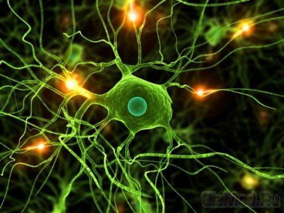 Процесс обучения повреждает мозг