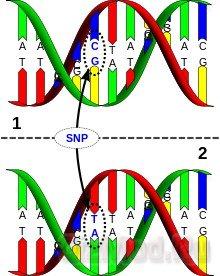 Генетический отличник