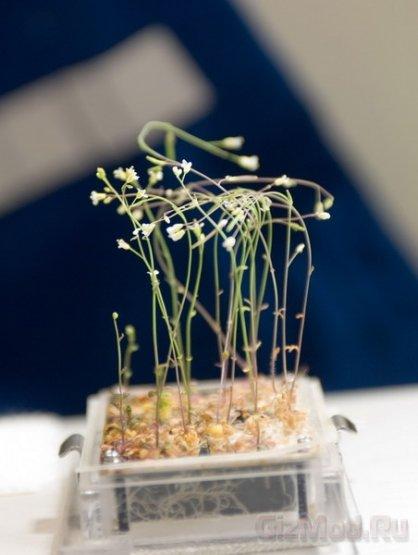 На МКС растения чувствуют себя лучше чем на Земле