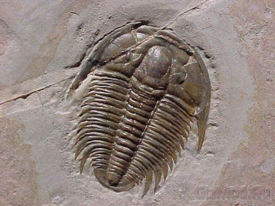 Неизвестные эмбрионы возрастом 500 млн. лет