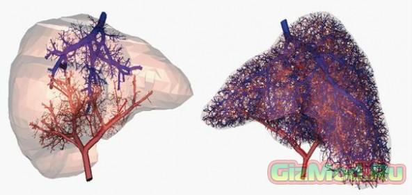 Ученые выяснили, как напечатать кровеносные сосуды в 3D принтере