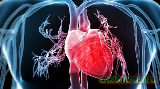 Генная терапия: клетки седца превращаются.. в кардиостимуляторы