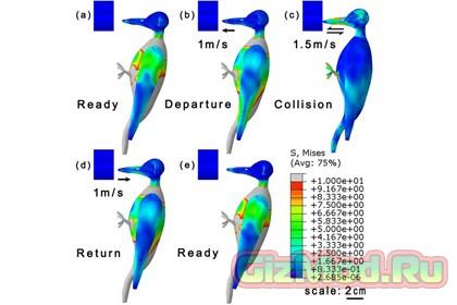 Анатомия дятла поможет в строительстве домов