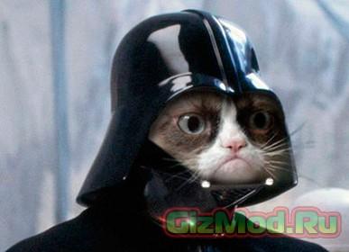 Котик на миллион долларов