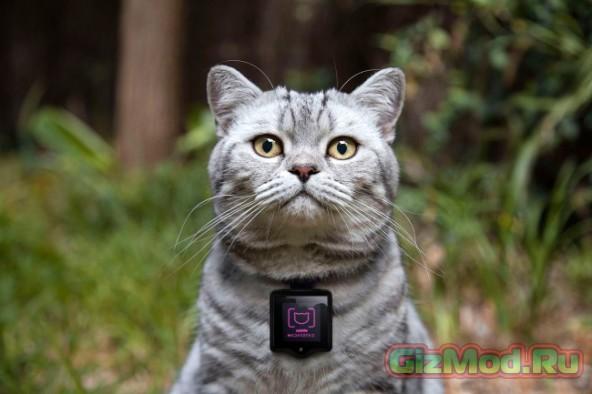 Камера для кошки