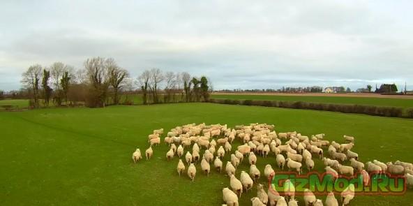 Дрон-пастух