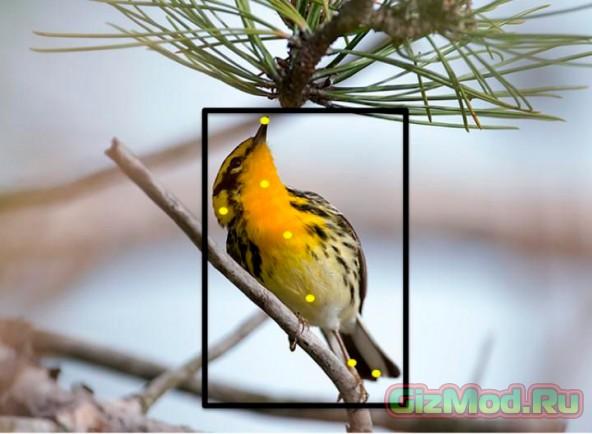 Программа поможет опознать вид птицы