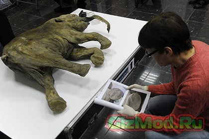 Российские ученые смогут клонировать доисторические виды