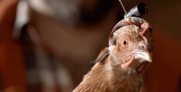 Курица - лучший стабилизатор для камеры