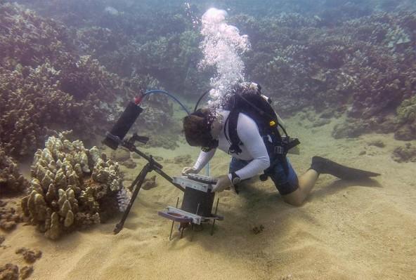 У ученых появился подводный микроскоп