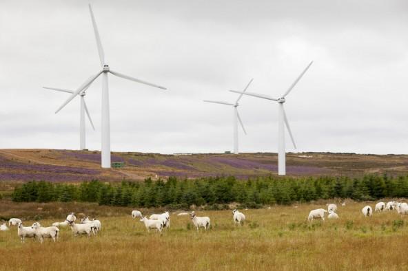 В Шотландии излишек энергии от ветряных электростанций